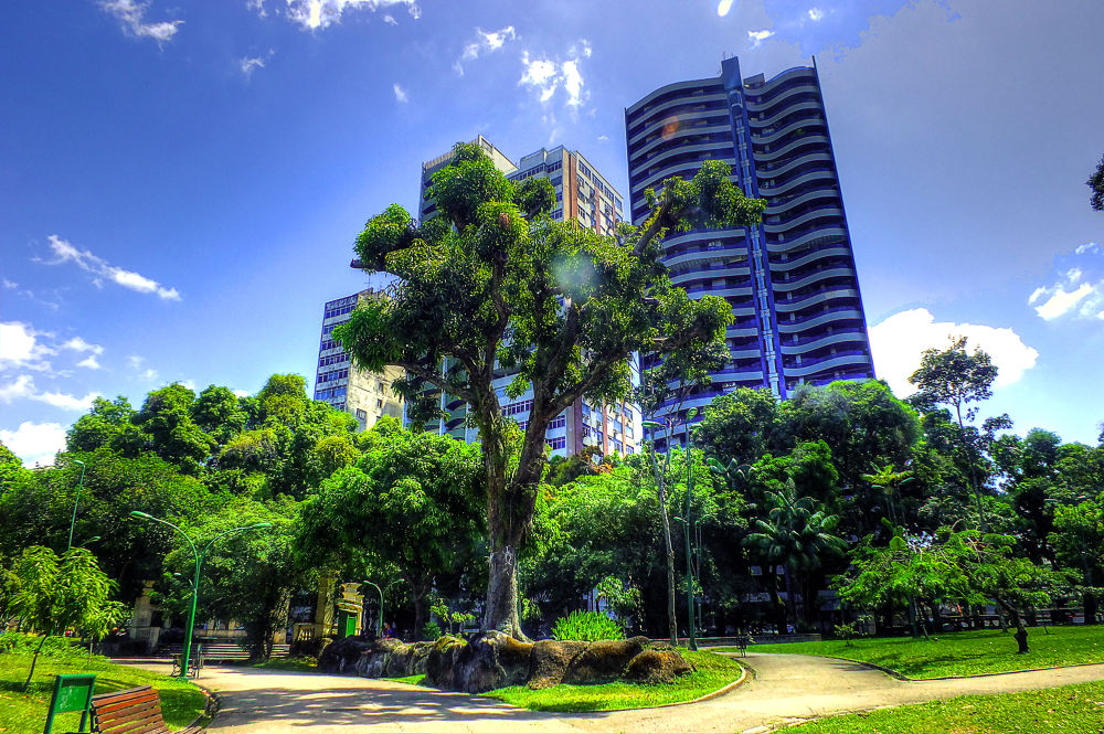 Photo in Random #belem #para #brasil #fuji hs25 #rui santos #rui para #nature #natureza #praça da república #república