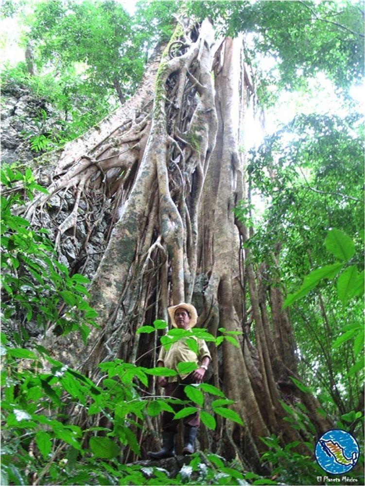 Photo in Travel #laguna #miramar #chiapas #mexico #jungle