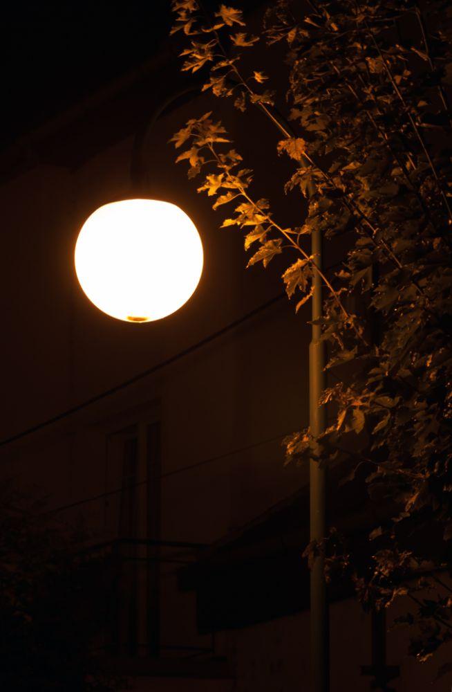 Photo in Street Photography #night #street #lamp #tree