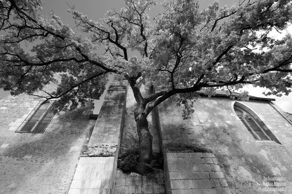 Photo in Random #tree #church #odd #nature #architecture #light #beauty #b&w #monochrome #fine art #photography #nikon #hekography