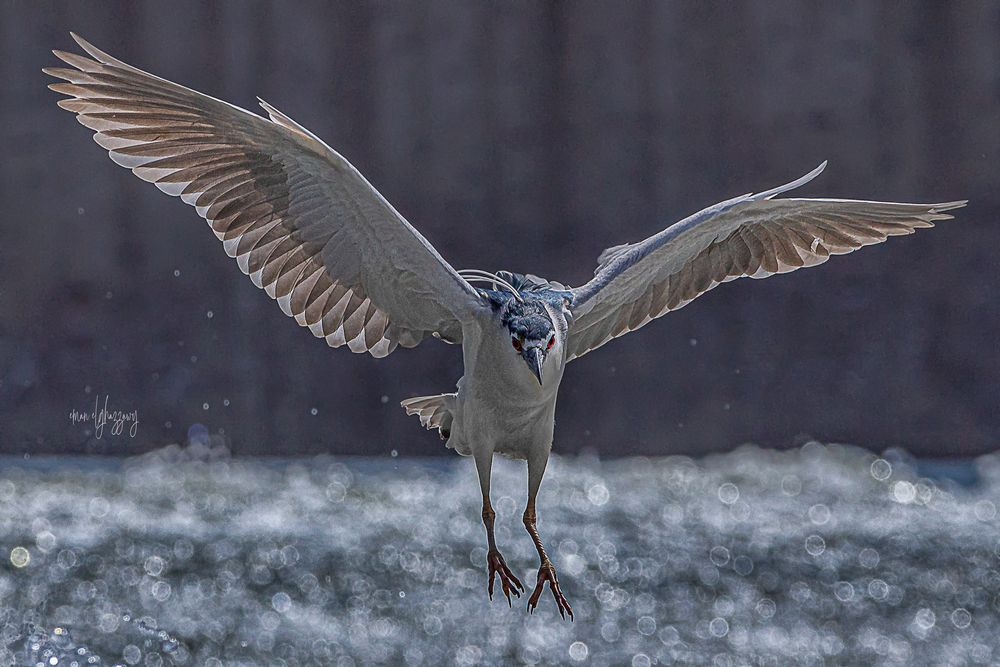 Photo in Animal #animals #birds #wildlife #water birds #action #nature #water #canon