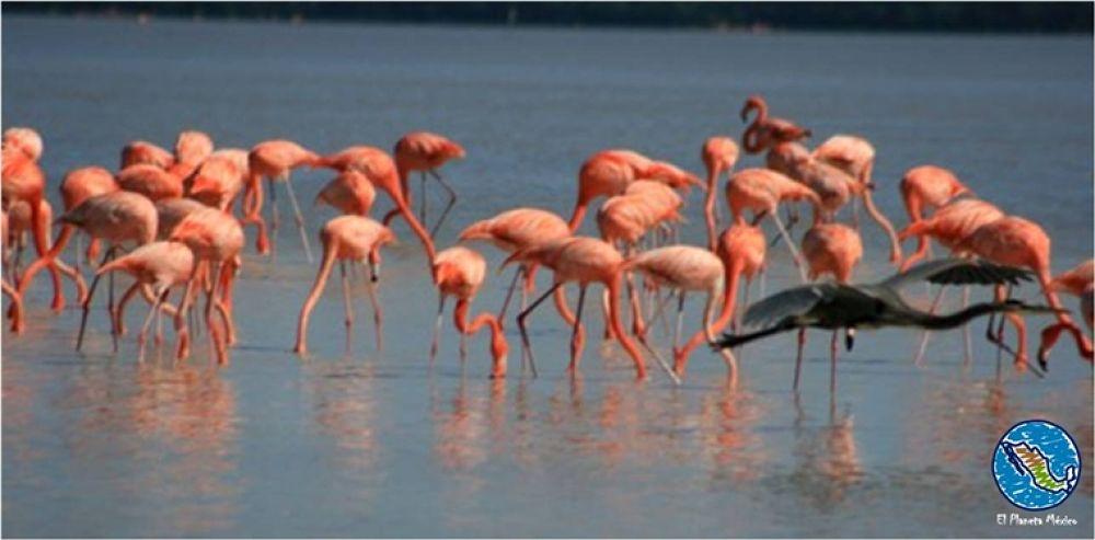 Photo in Travel #flamingos #celestun #yucatan #mexico #flamencos