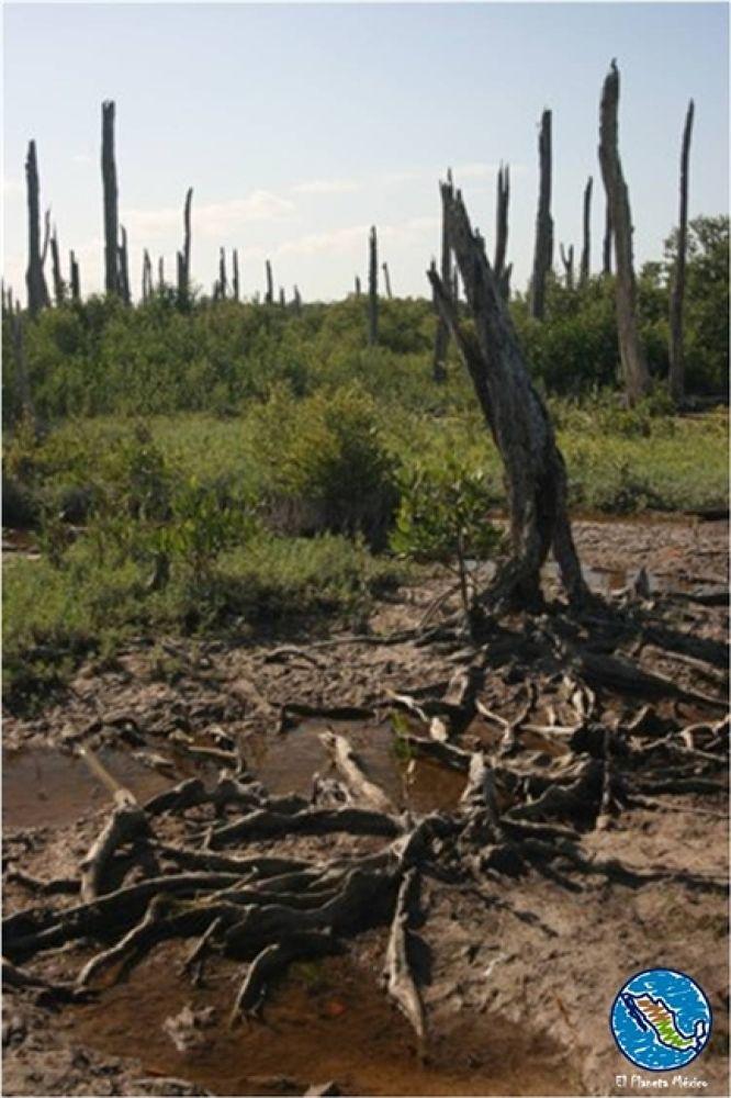 Photo in Travel #petrified forest. #celestun #yucatan #mexico