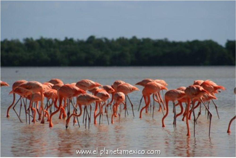 Photo in Travel #celestun #ria lagartos #flamingo #flamenco #natural reserve #yucatan