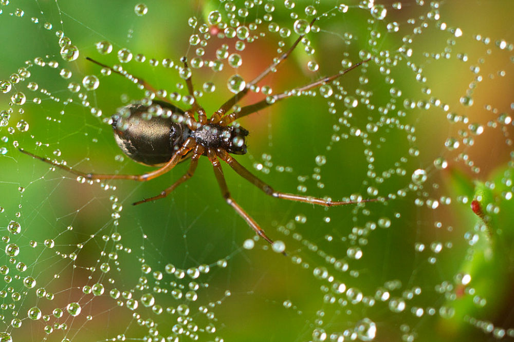 Photo in Macro #aranhas #insectos #selva #natureza #macro