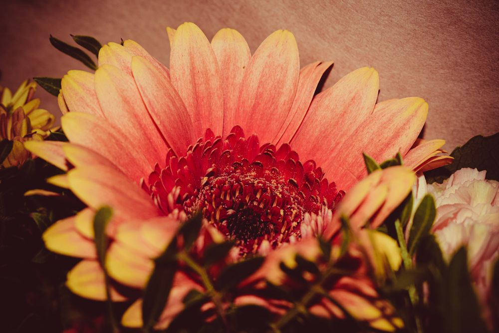Photo in Nature #petal