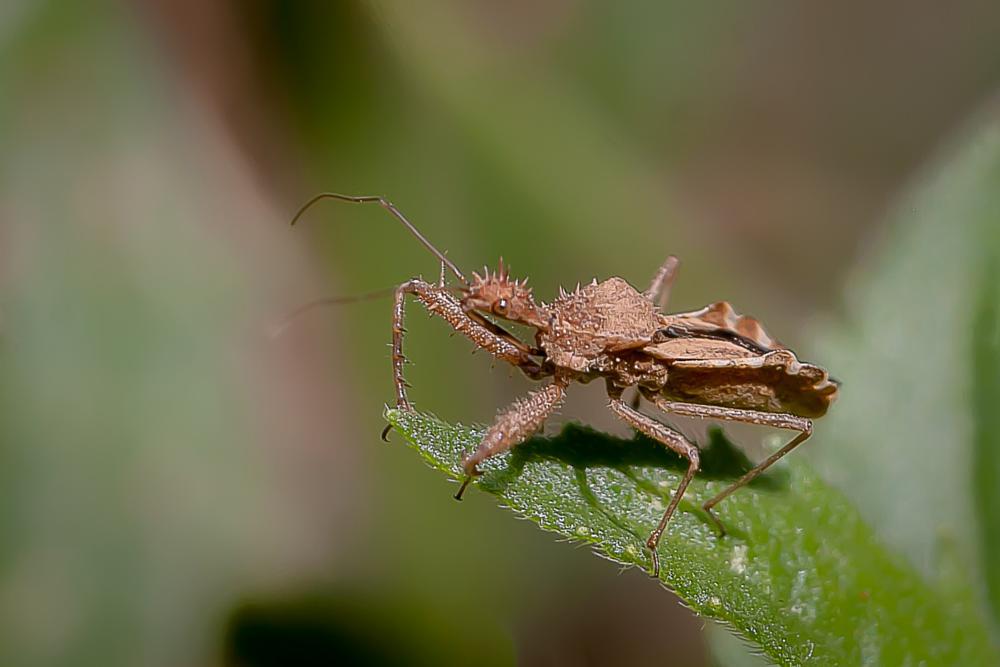 Photo in Macro #bug #insect #macro