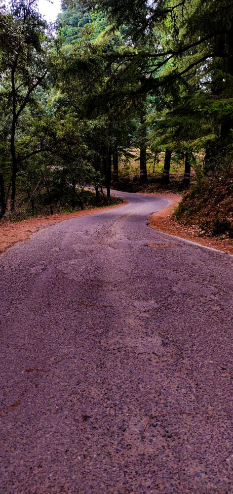 Photo in Nature #road #trees #mountains #nature #photography