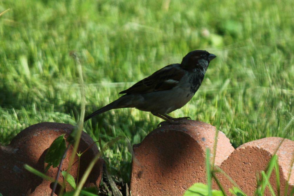 Photo in Animal #bird #brick #red #macro