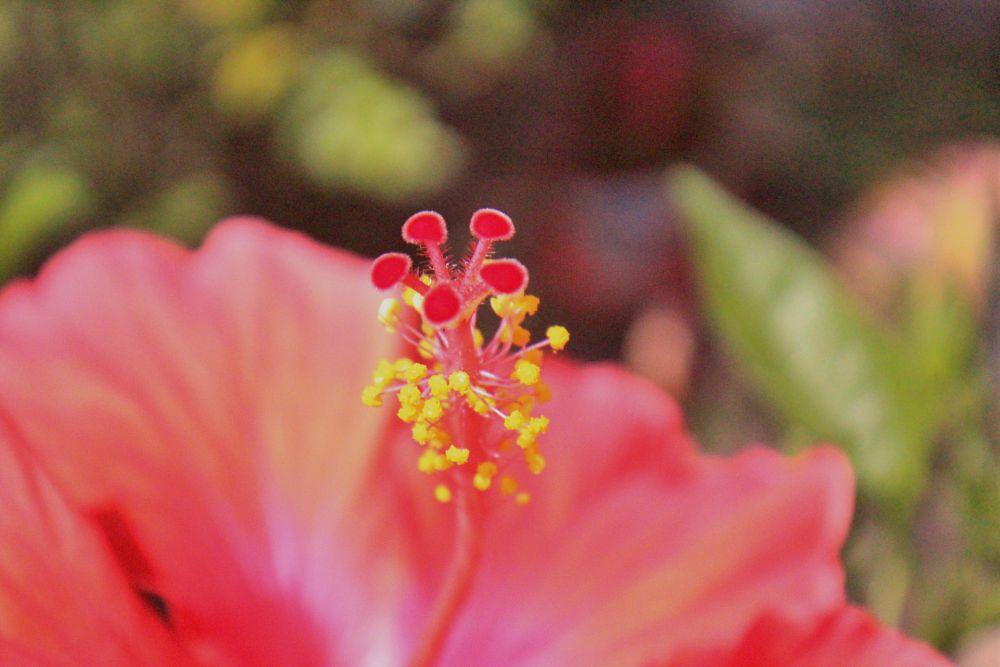 Photo in Macro #flower #heart #center #macro