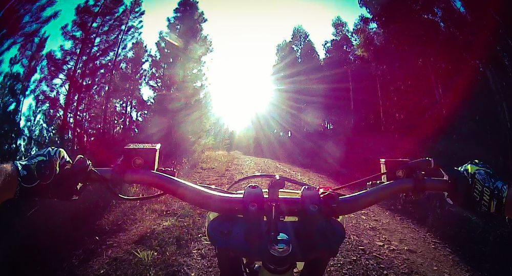 Photo in Sports #motorcycle #forest #road #sunshine