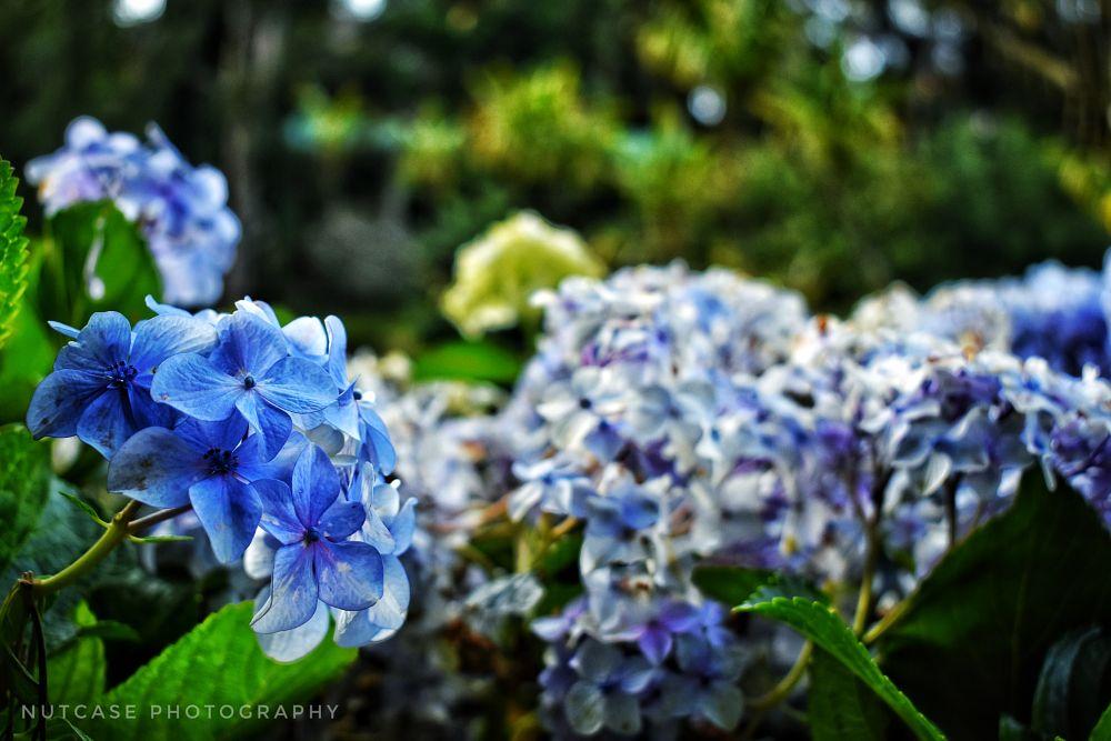 Photo in Random #nature