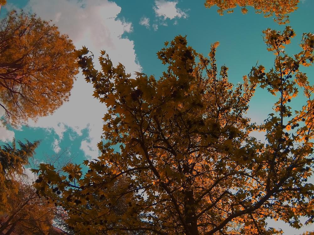 Photo in Nature #hero3 #nature #autumn #sky #tree #fall