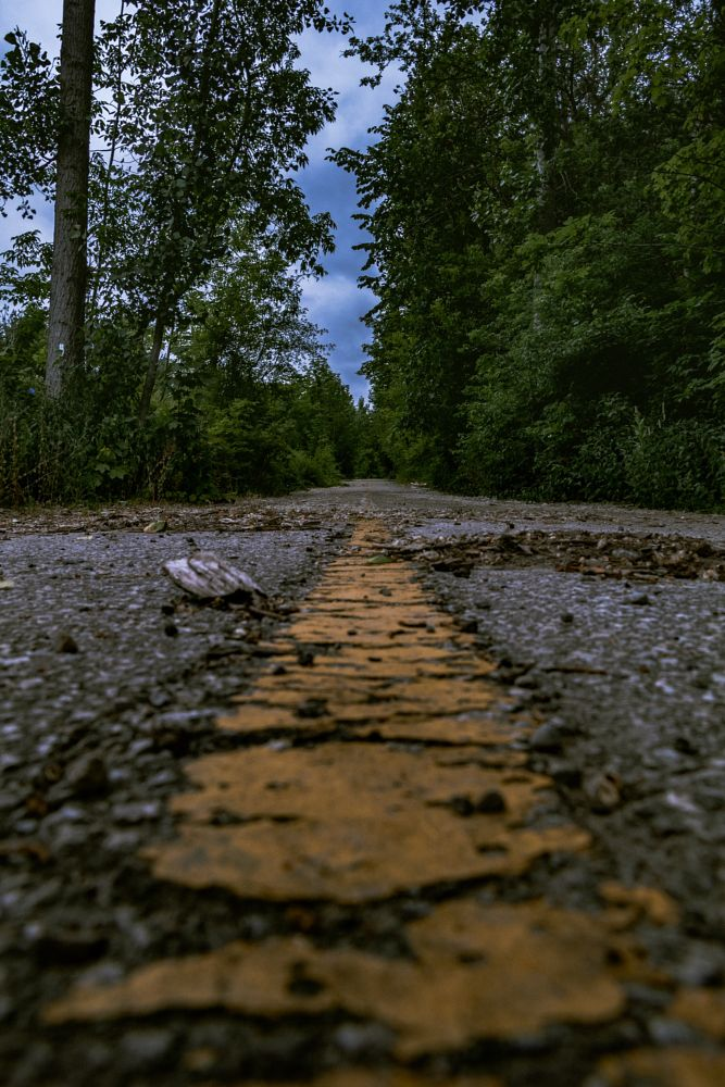 Photo in Landscape #road #portrait #detail #apocalypse #forest #trees #sky #leading lines #lines #perspective