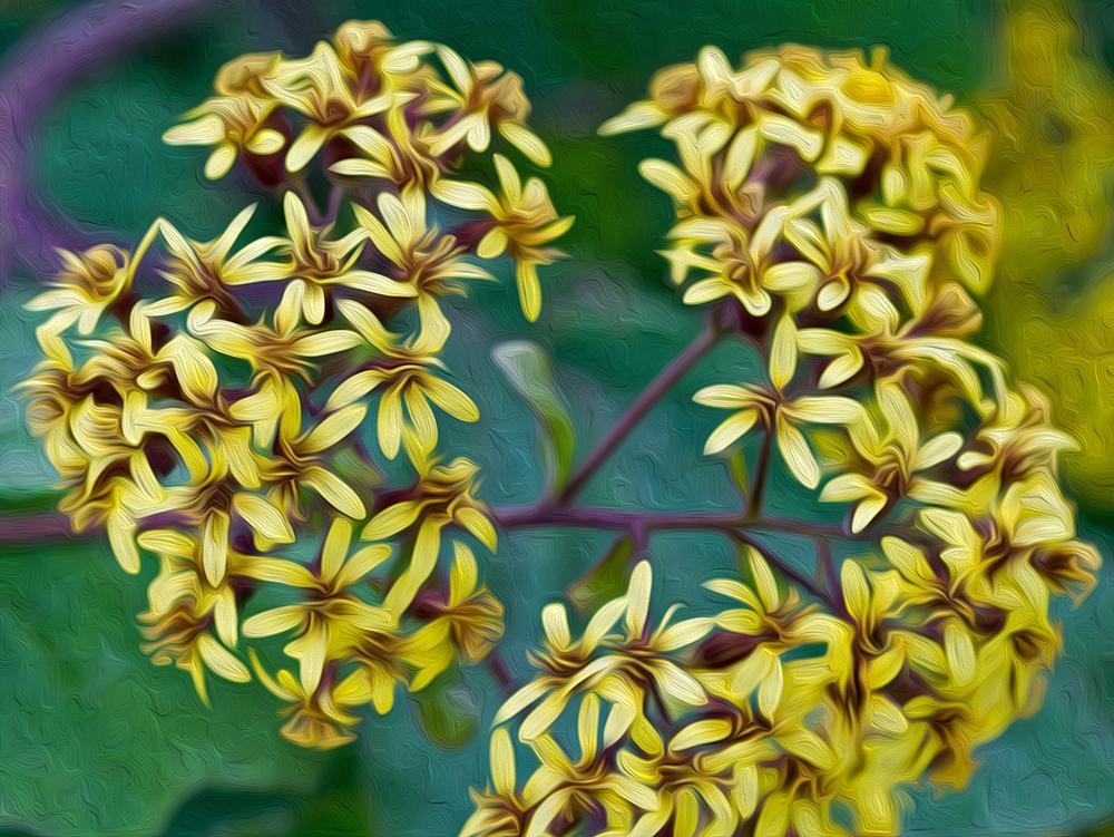 Photo in Nature #flower #close-up #nature #travel #digital darkroom