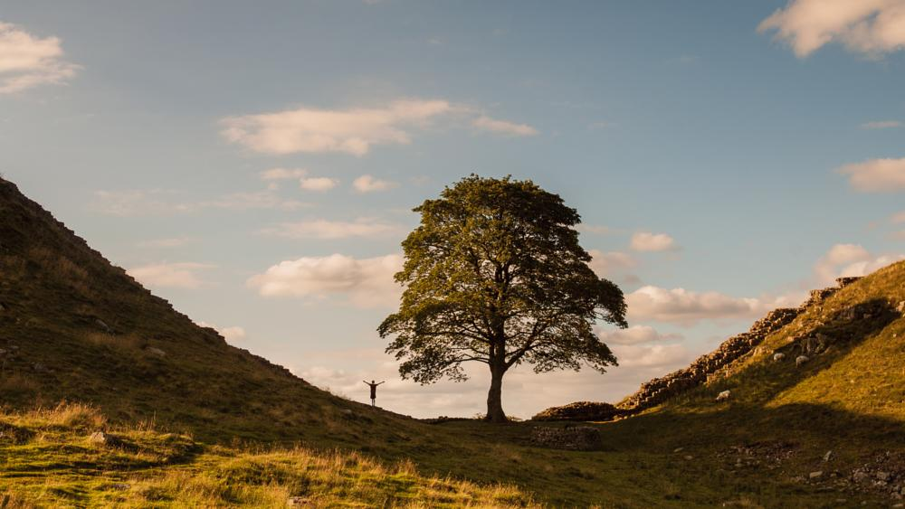 Photo in Landscape #northumberland #tree #hadrians wall