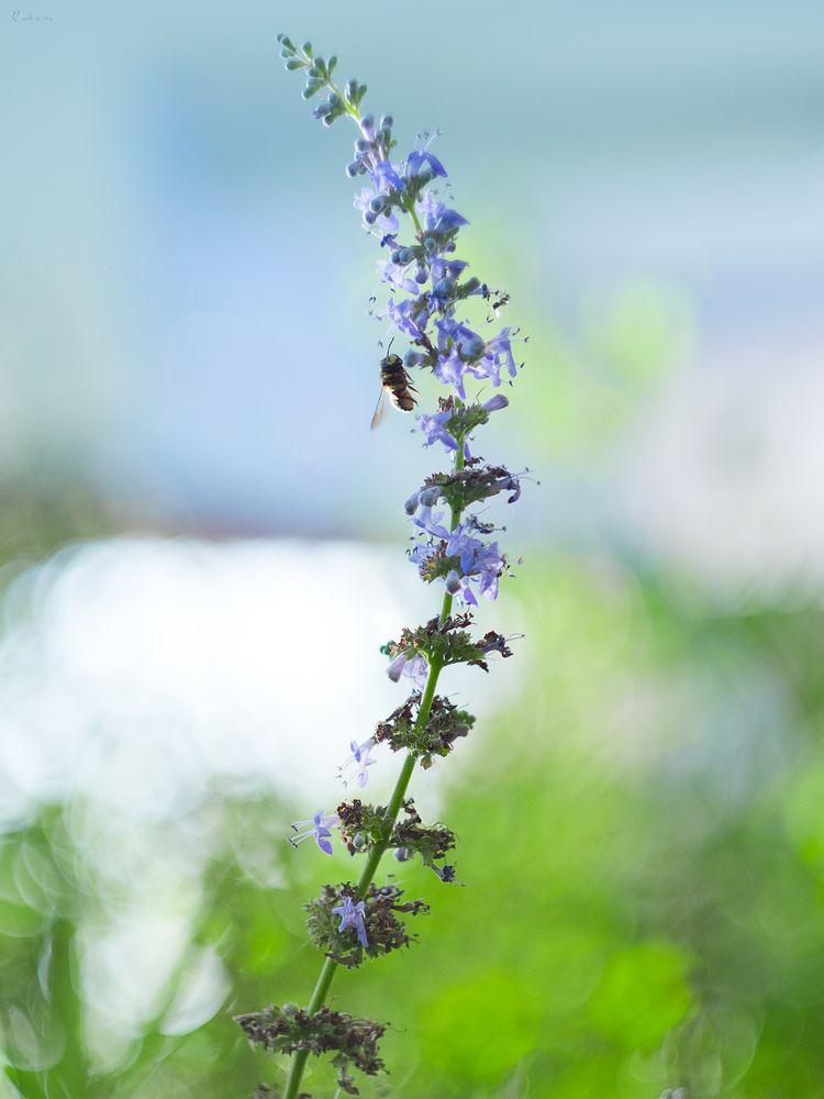 Photo in Random #nature #bee #green #summer #2019