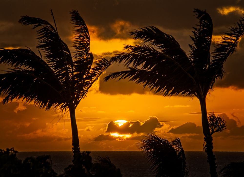 Photo in Landscape #sun #sunset #clouds #palm tree #horizon #pacific ocean #wind #maui #hawaii #island #silhouette