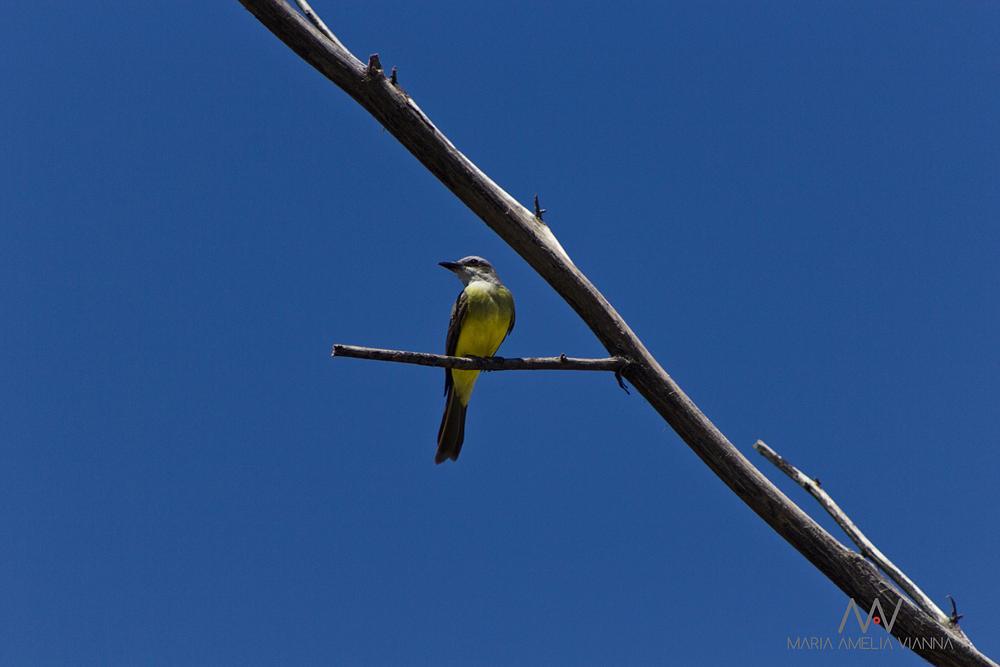 Photo in Nature #bird #blue sky #minimalism #nature