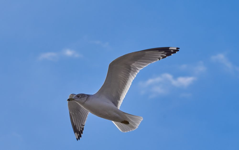 Photo in Nature #nature #bird #flight