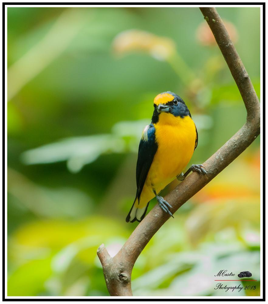 Photo in Animal #birds #nature #travel #still life