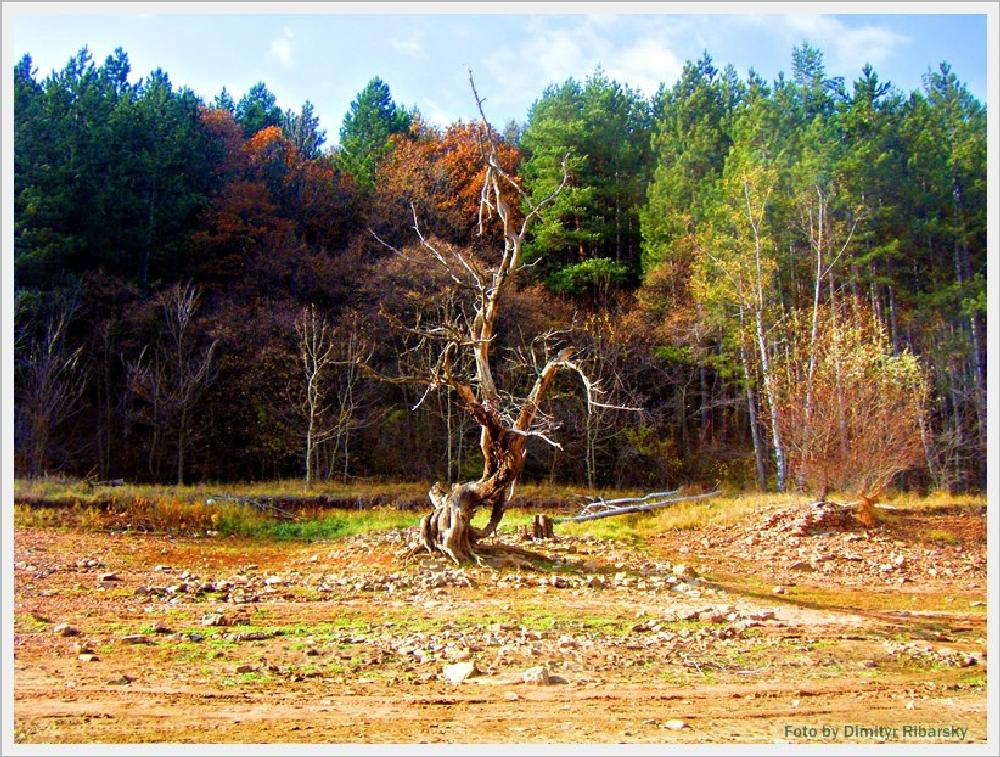 Photo in Landscape #nature #landskape #automn