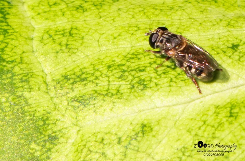 Photo in Macro #tiny #fly #green #leaf