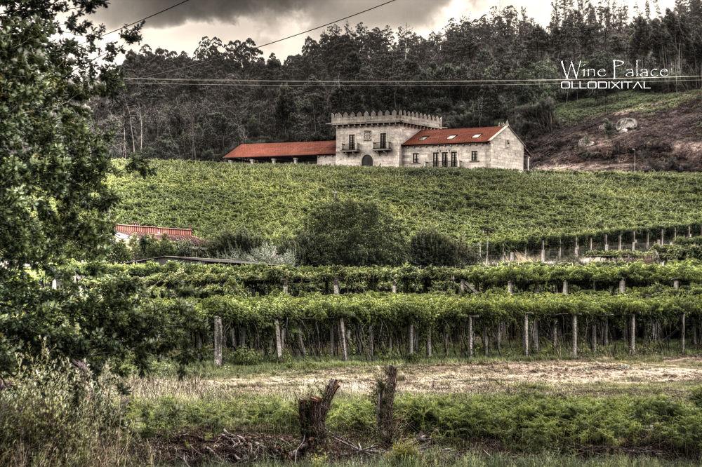 Photo in Landscape #bodega #wine #vino #maran #arcos da condesa #lagar da condesa #galicia #galician #ríasbaixas #rías baixas #pontevedra #caldas de reis #wine cellar
