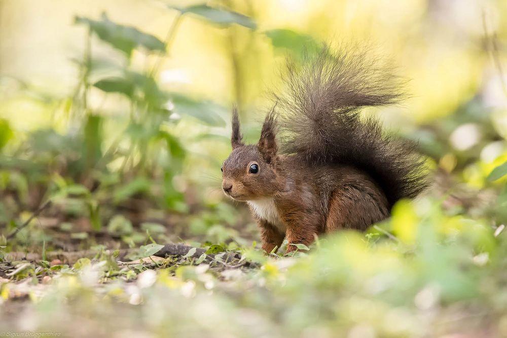 Photo in Animal #nagetiere #rombergpark #säugetiere #tiere