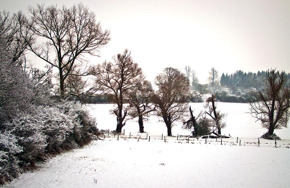 Photo in Landscape #snow #fields #trees #mist #misty