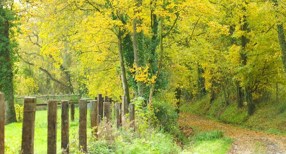 Photo in Landscape #random #woodland #tree #leaves #colors #xrated #calvados #normandy #normandie