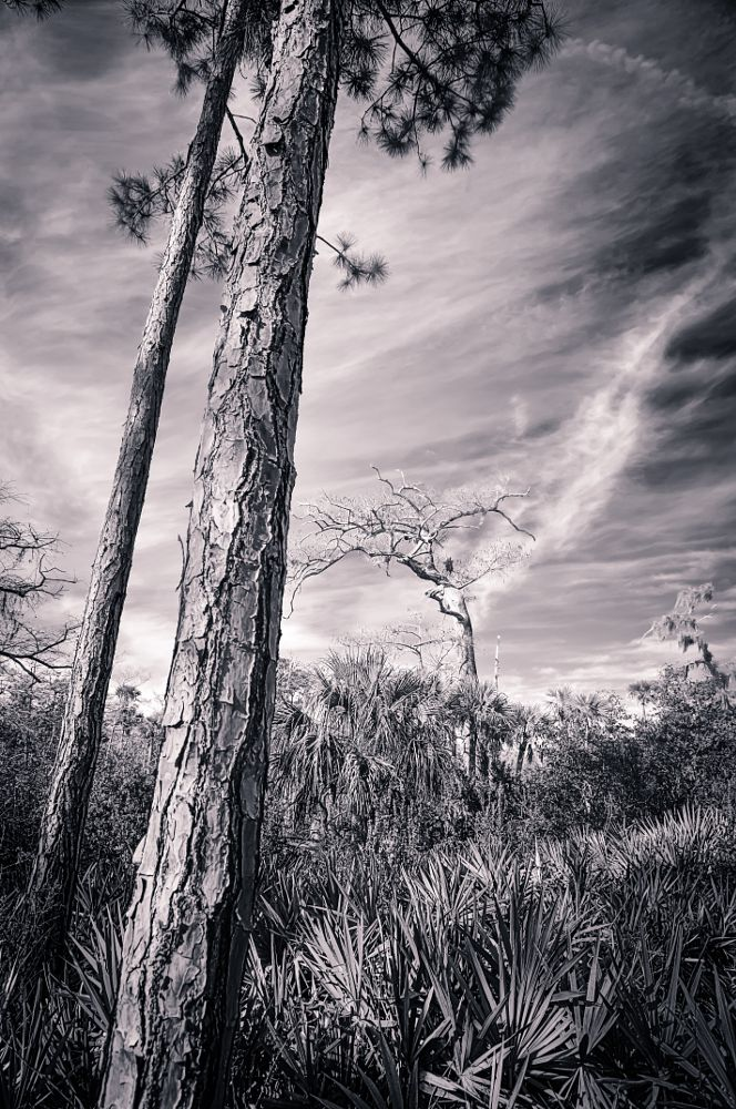 Photo in Landscape #forest #nature #outdoor #river #tropical #wilderness #florida #swamp #wetland #loxahatchee