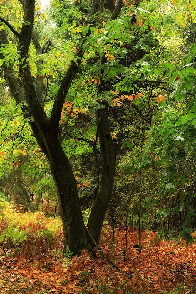 Photo in Nature #fall #rain #color #colors #red #yellow #green