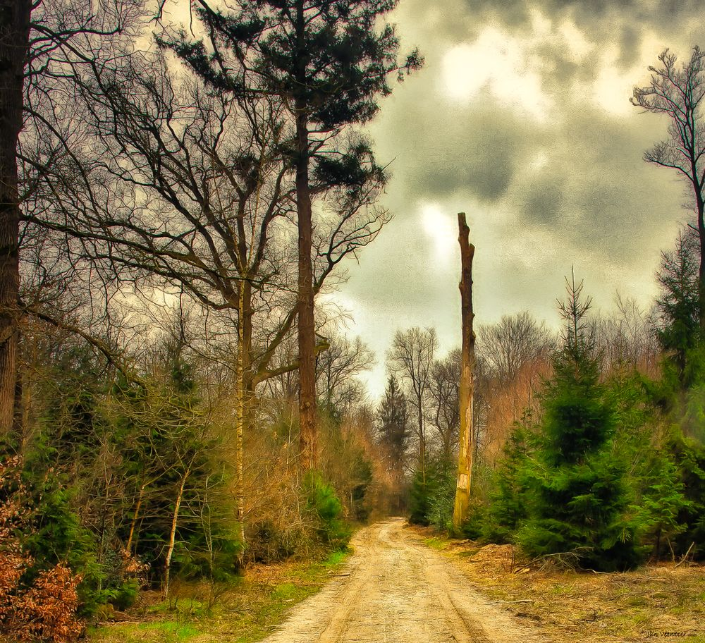 Photo in Fine Art #nature #landscape #trees #clouds #skyscape #forest #path #photoart #fine art