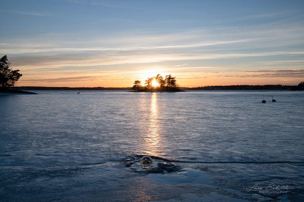 Photo in Landscape #ps #sel #grundvik #landscape #animal #seal #sunset