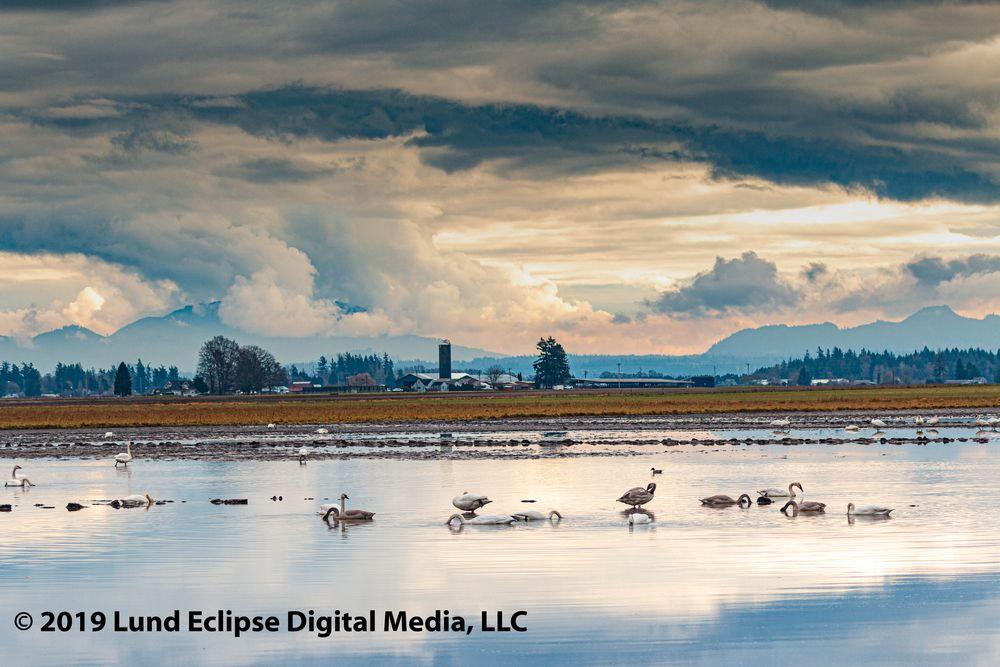 Photo in Random #birdphotography #wildlife #natgeo #swan #nature