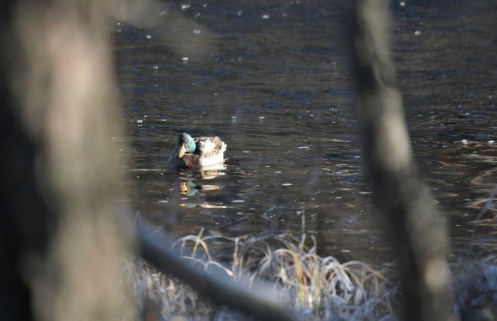 Photo in Nature #bird #animal #wildlife #nature #ornithology #reflection #water