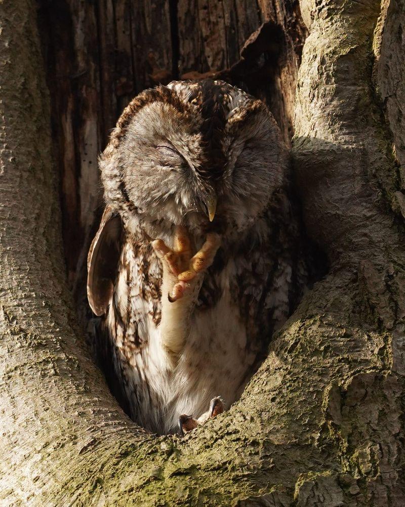 Photo in Nature #nature bird holland owl