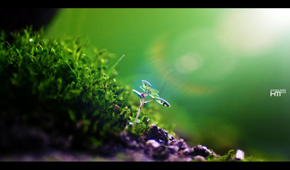 Photo in Macro #light #leaf #grass