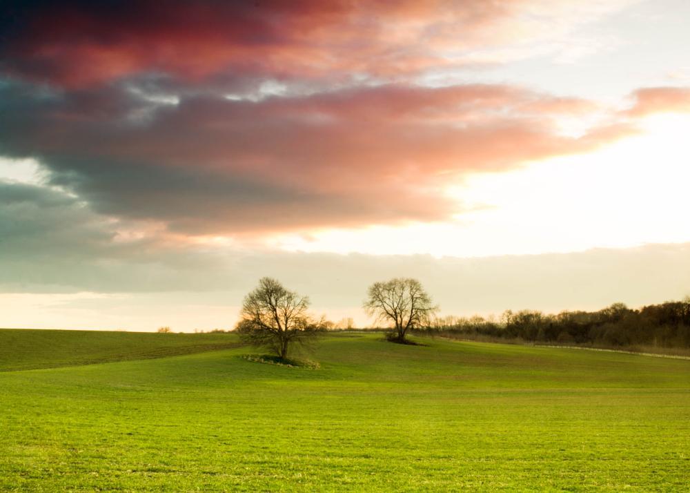 Photo in Landscape #sunset #tree #field #sky #landscape