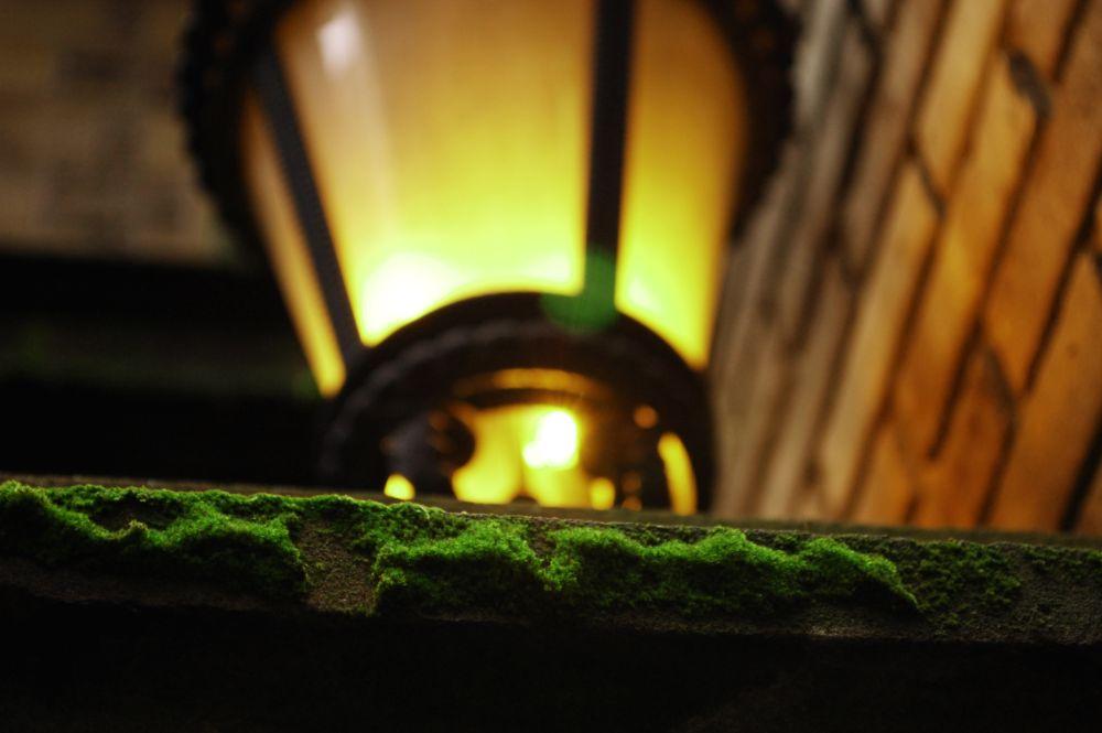 Photo in Nature #moss #street lamp #street #urban #city #new york #ny #nyc #downtown #financial district #wall street #summer #sunset #nature #wilderness #wild #outdoors #office #liveauthentic #getoutside #vsco #vscocam #bestvsco #flower #vegan #vegetarian #raw #keepitwild #yokophotography #macro #nikon #d40 #green #leaf #newyork #natureaddict #bokeh #explore #instafocus #peaceful #backpacking #exploring #folkmagazine #wanderer #travel #manhattan #visual #vivid #organic #filmcamera