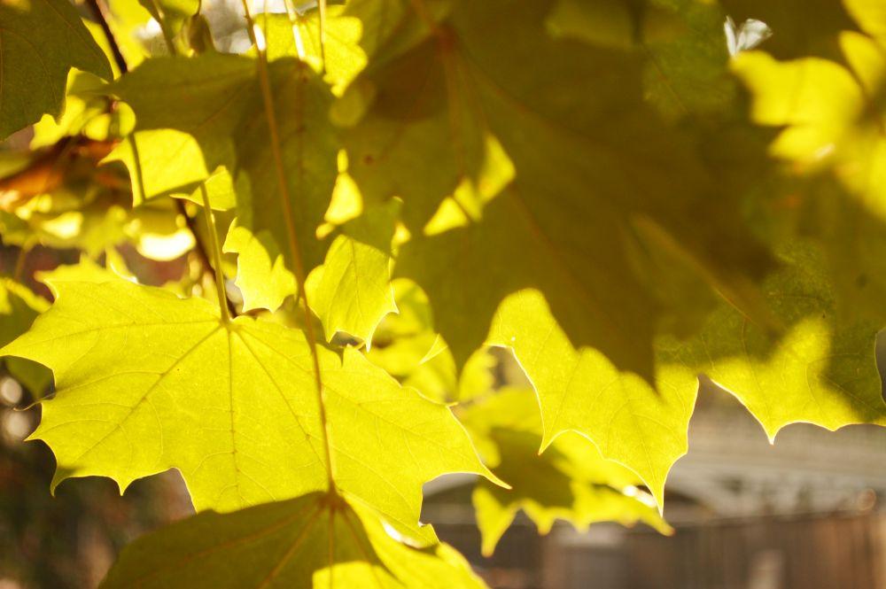 Photo in Nature #leaves #branch #tree #summer #sunset #afternoon #sunlight #nature #wilderness #wild #nationalpark #outdoors #hiking #folklife #liveauthentic #indie #getoutside #vsco #vscocam #bestvsco #flower #vegan #vegetarian #raw #healthy #keepitwild #yokophotography #macro #street #nikon #d40 #green #yellow #leaf #newyork #nyc #ny #natureaddict #mountain #bokeh #explore #instafocus #peaceful #backpacking #exploring #folkmagazine #wanderer #travel #manhattan #upperwestside #uws #visual #vivid #centralpark #organic