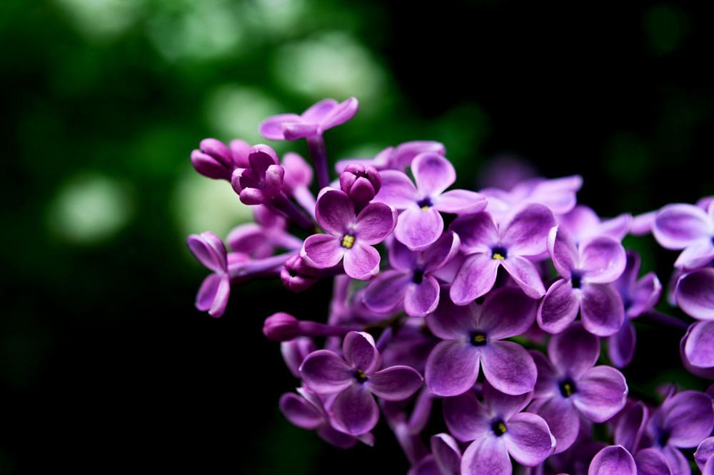 Photo in Macro #pretty #purple #flower #spring #sun #light #ny #city #new york #shadow #macro #nature #nikon #bokeh #forest #park #tree #green