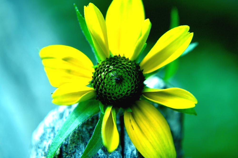 Photo in Nature #summer #flower #hot #sun #light #nature #macro #nikon #bokeh #wood #tree #forest #park #ny #new york #city
