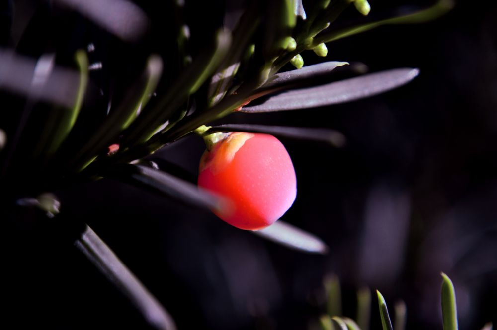 Photo in Nature #red #berry #wood #tree #forest #park #sun #light #nature #macro #bokeh #nikon #autumn #fall #ny #city #new york