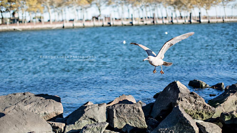 Photo in Random #bird #rodrigolopesusa #rodrigolopesnyc