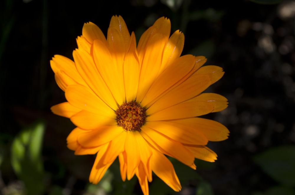 Photo in Macro #macro #flowers #light #shadows