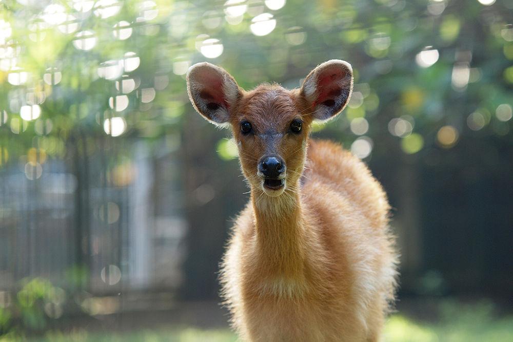Photo in Animal #ypa2013 #deer #boke #backlighting #backlite #animal #nature #mammals #olympus #syahrul