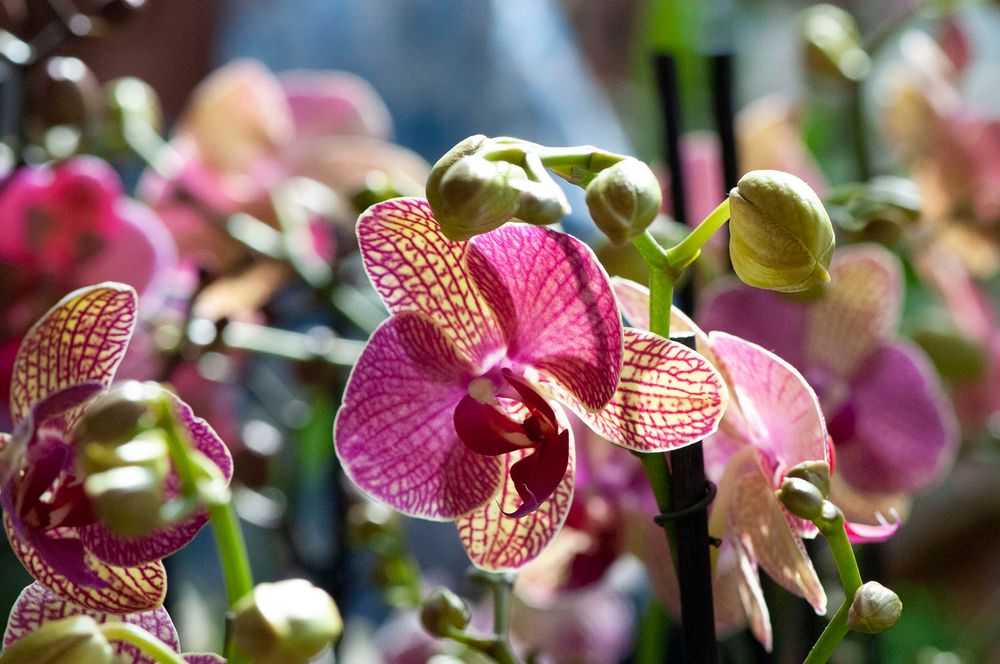 Photo in Nature #flor  orquídea  natureza