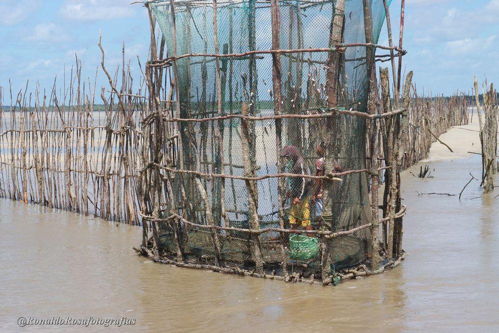 Photo in Journalism #amazonia peixes maiandeua